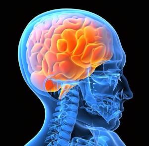 human-brain011